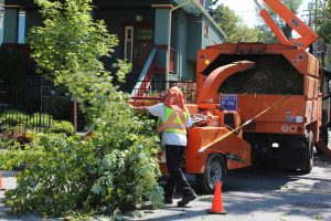 Cleaning up Tree Branches After Cutting - Big Easy Tree Removal