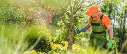 Man Fertilizing a Tree in Louisiana
