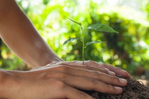 Big Easy Tree Removal Tree Preservation Services