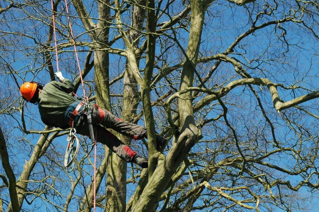 Cutting Tree Service in New Orleans by Big Easy Tree Removal
