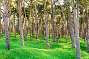 Preserving Trees in Louisiana