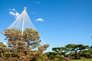Preservation Tree Service
