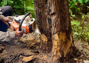 Tree Removal Service in Hammond, LA - Big Easy Tree Removal