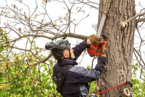 Tree Surgeon Cutting Tree Branches in Covington - Big Easy Tree Removal