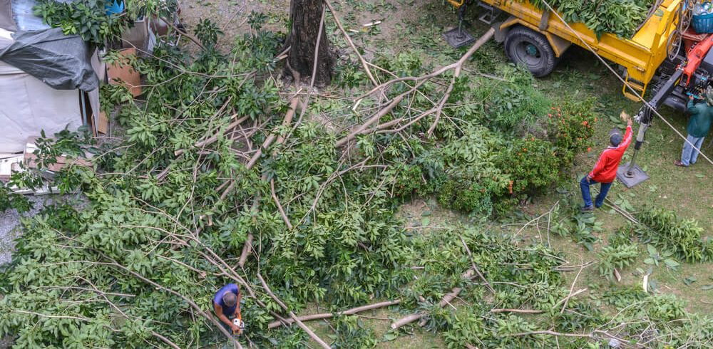 tree cutting services in new orleans