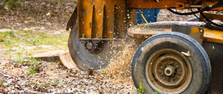 Grinding a Stump in Louisiana