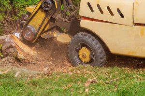 Stump shredded removal grinding stumps