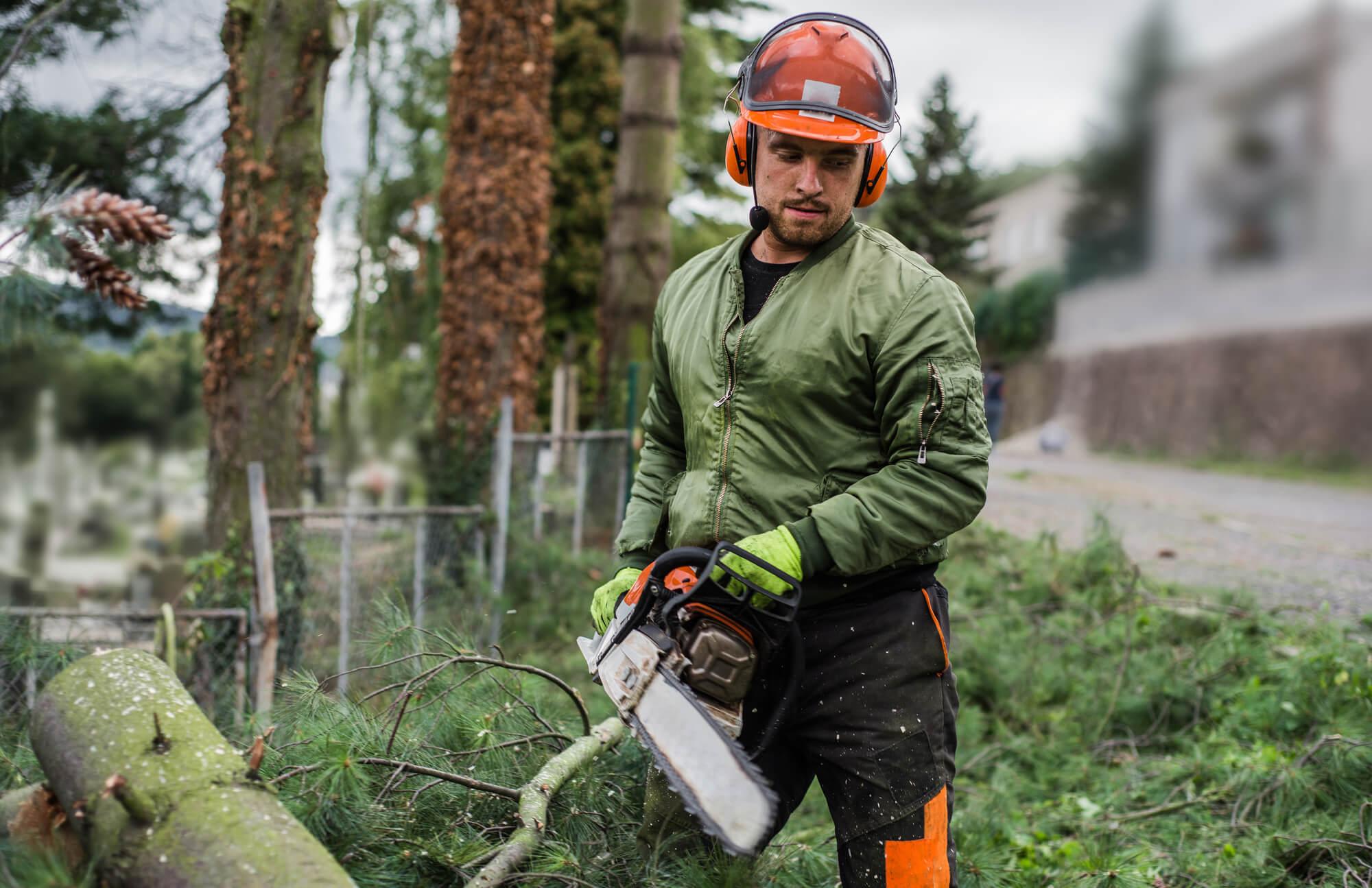 laplace tree arborist - Big Easy Tree Removal