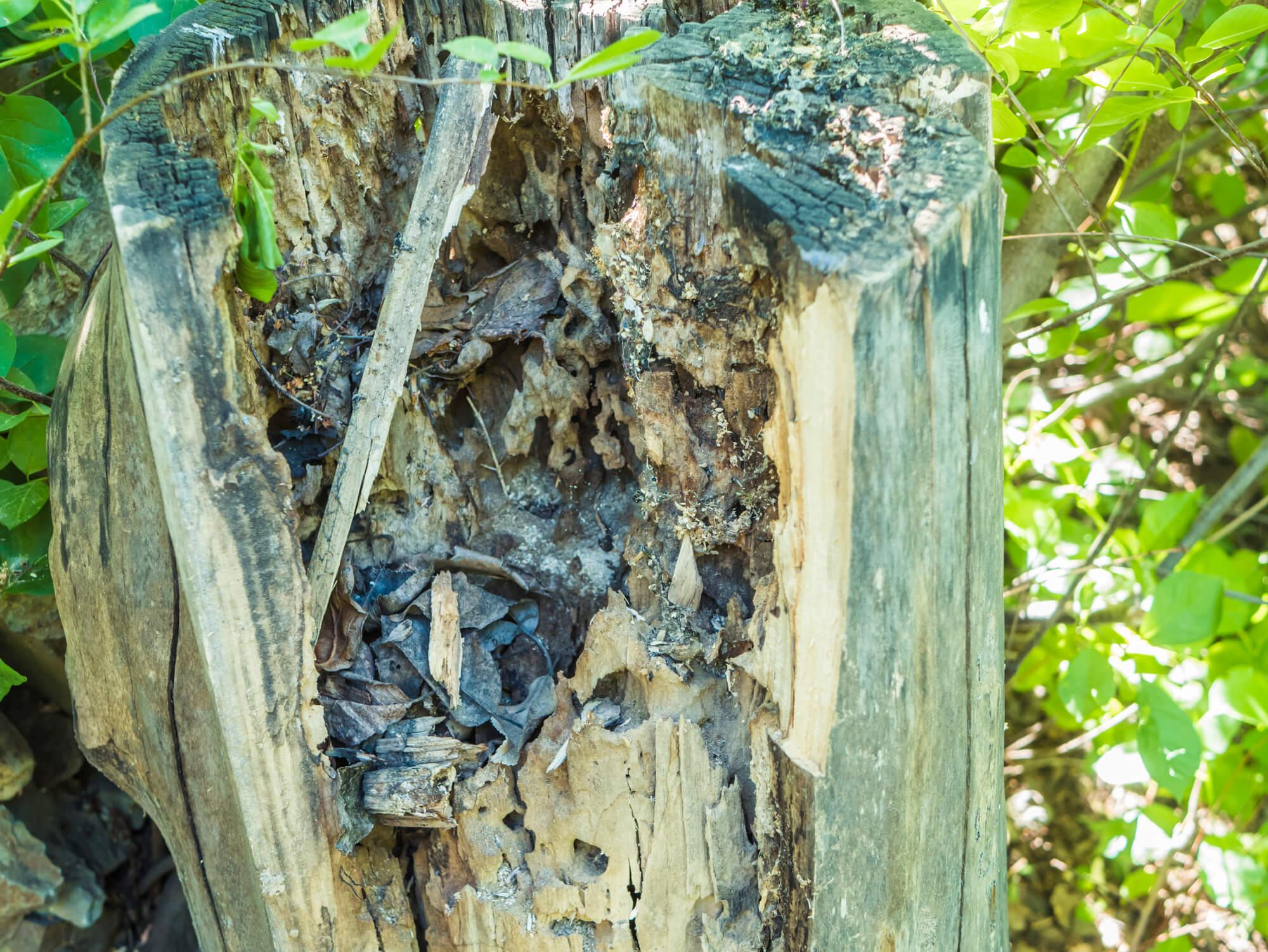 louisiana termite prevention - Big Easy Tree Removal