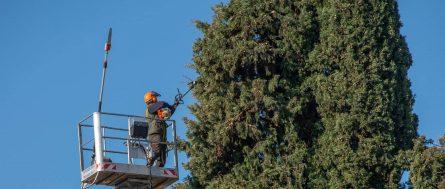 louisiana tree support company - Big Easy Tree Removal