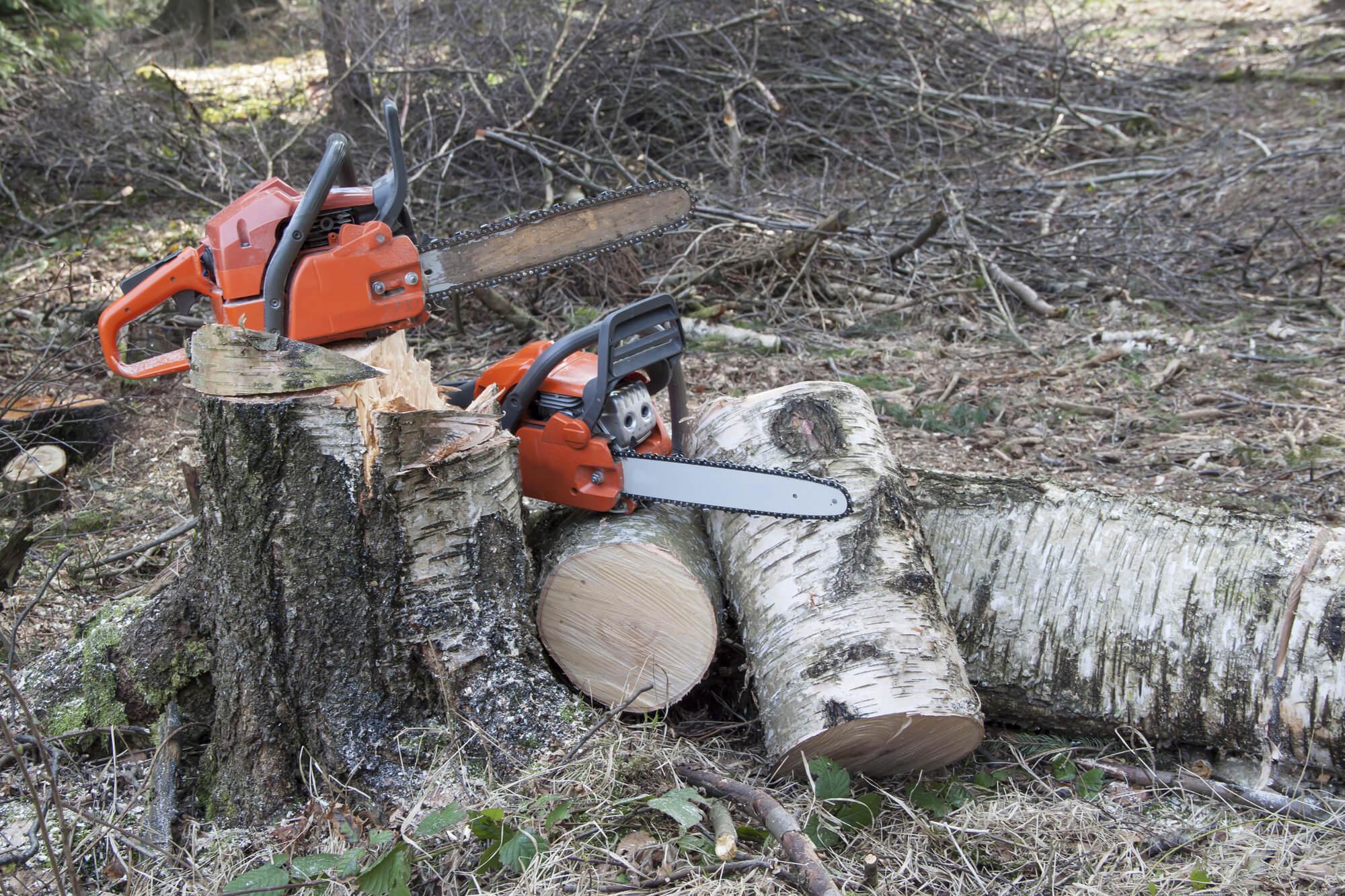 mandeville tree specialist - Big Easy Tree Removal