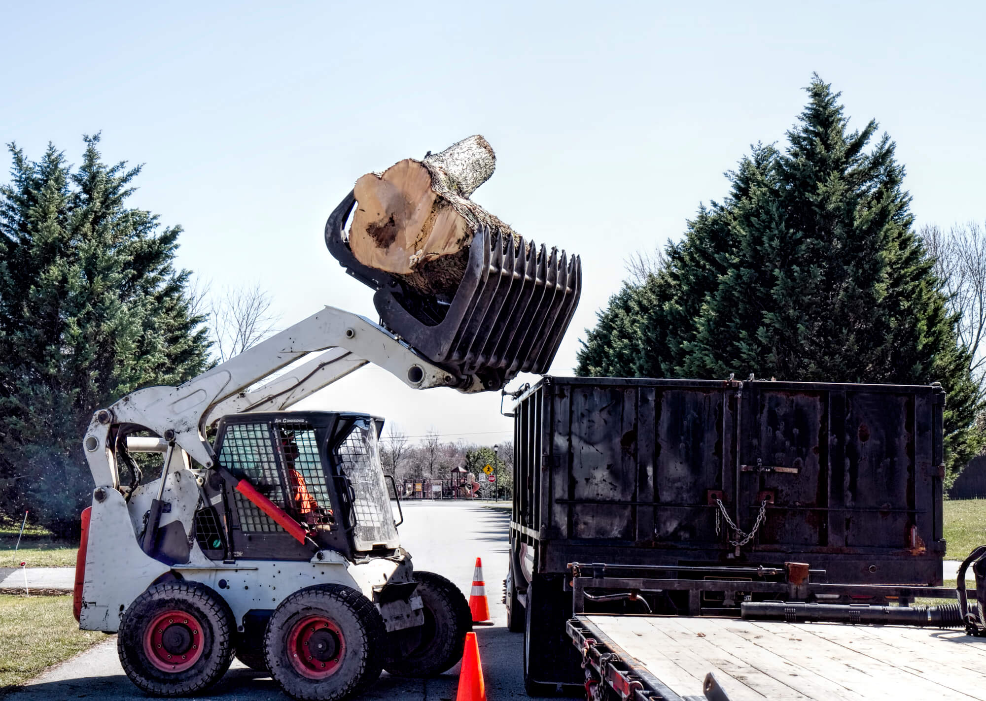 residential tree removal in louisiana - Big Easy Tree Removal