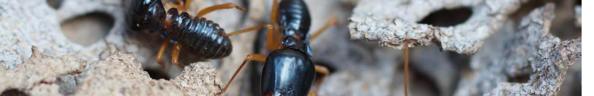 Termite Treatments Banner