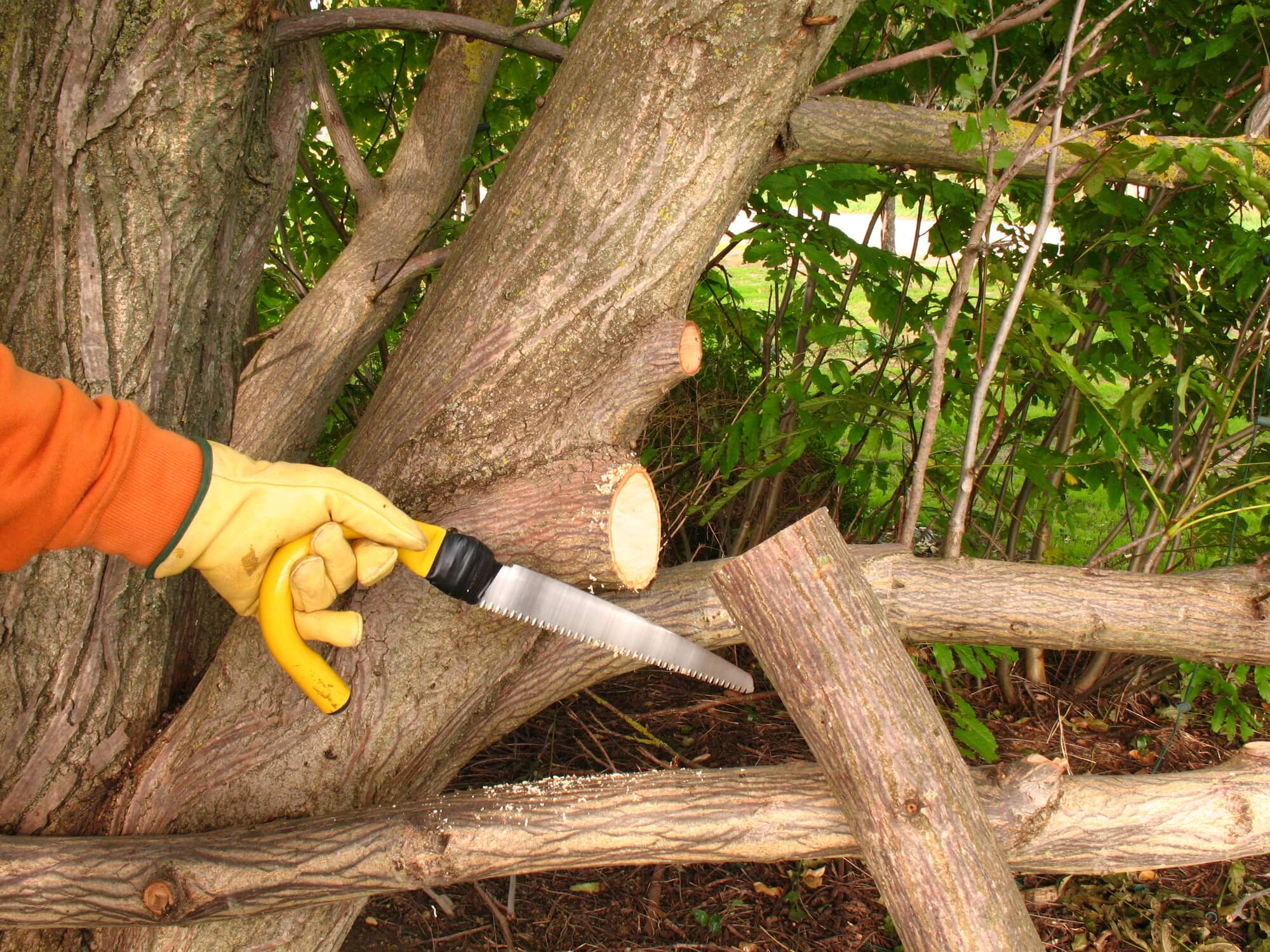 mandeville tree pruning services - Big Easy Tree Removal3
