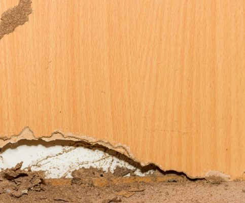 termite damage cost - Big Easy Tree Removal